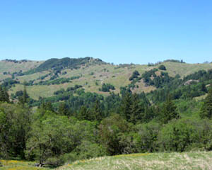 Hills of southern Humboldt