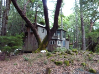Cabin In the Woods on 20 acres